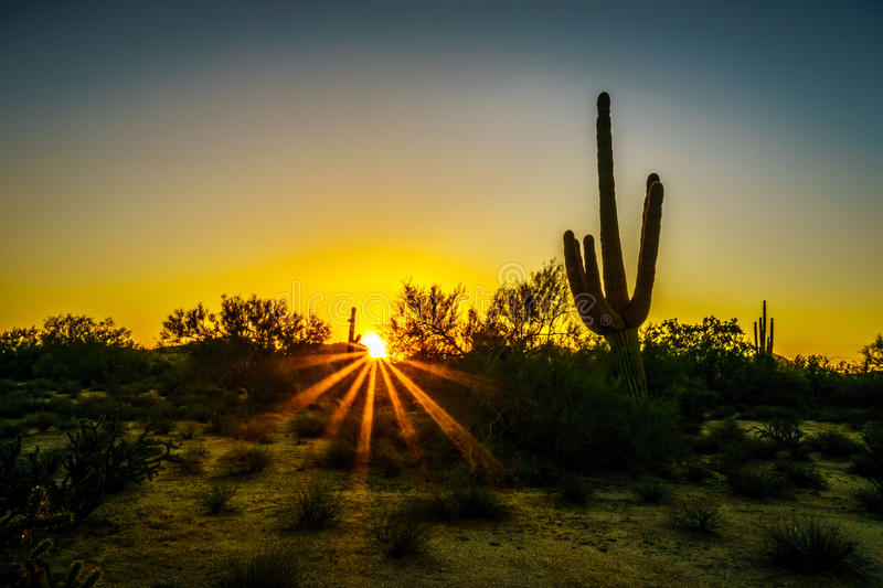 Sunrise with Sun Rays shining through the Shrubs in the Arizona Desert. With a Saguaro Cactus in the Foreground stock photos