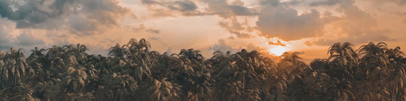 Sunrise sunset jungle panorama stock illustration