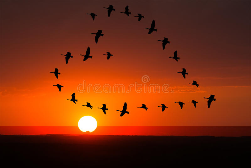 Sunrise, Sunset Love, Romance, Birds. Love and romance concept of a flock of birds flying in a heart formation with a a sunrise or sunset behind them stock image