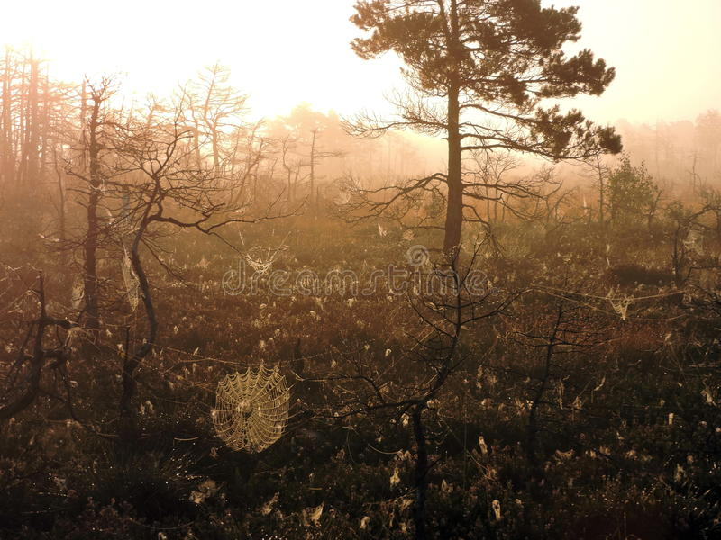 Sunrise in swamp, Lithuania royalty free stock photography