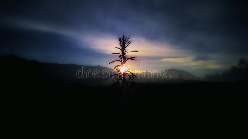 Sunrise on the Tea Plantation stock images
