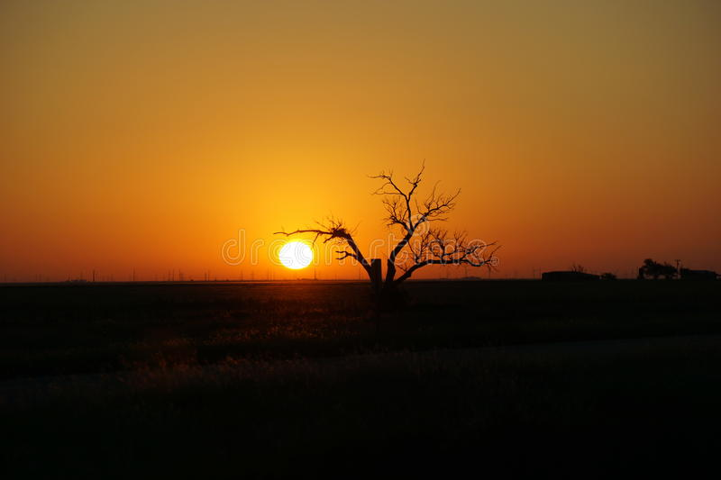 Sunrise with a tree. stock photography