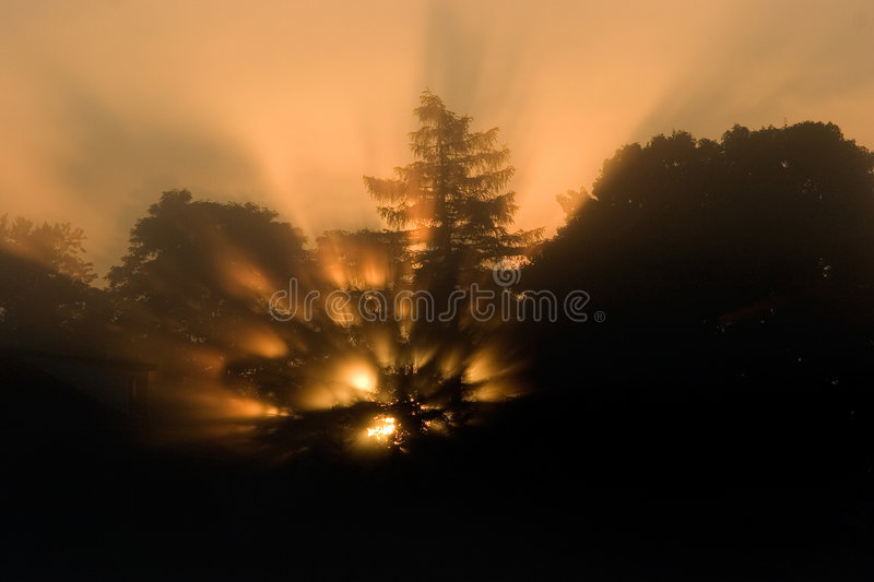 Download Sunrise Through The Trees Stock Images - Image: 868264