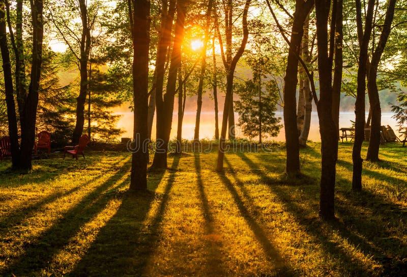Sunrise Through the Trees Across a Misty Lake stock photography