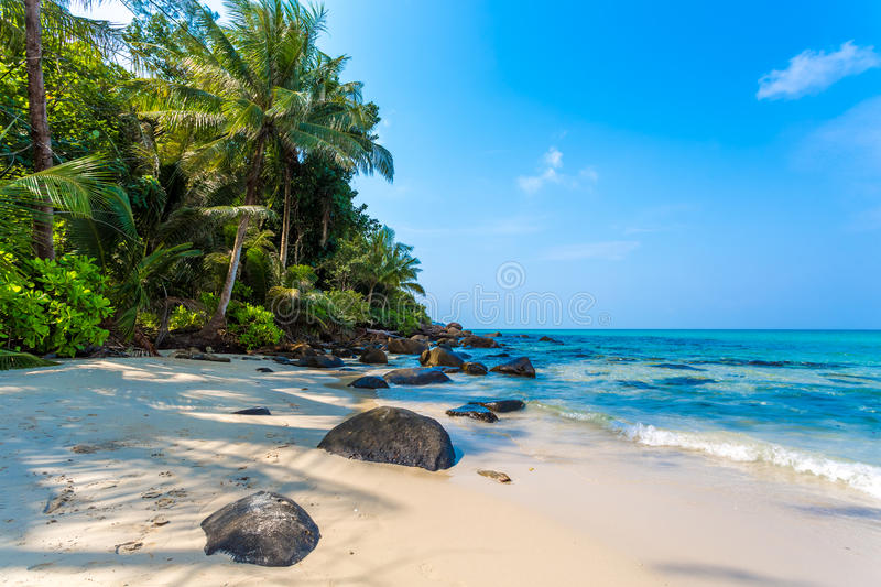 Download Tropical Beach Royalty Free Stock Photo - Image: 30245205