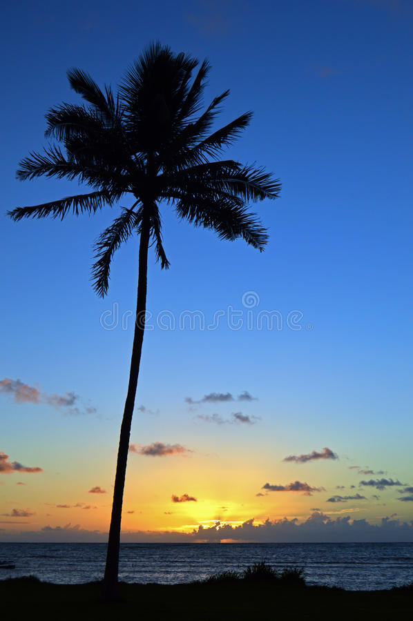 Sunrise in the Tropics. The sun rises on another beautiful day on a tropical island stock image