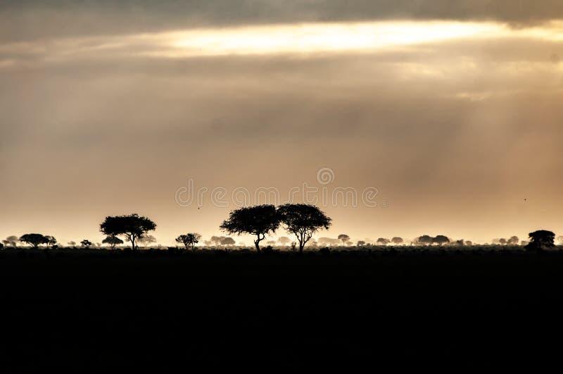 Sunrise in the Tsavo East National Park stock photos