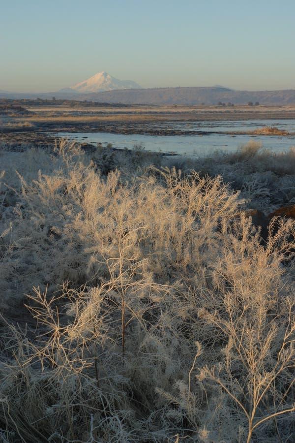 sunrise tule lake zimy. fotografia royalty free