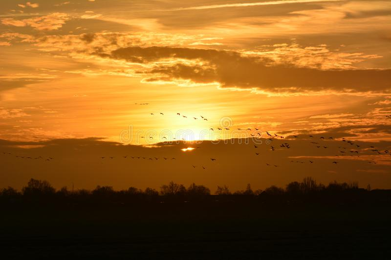 Sunrise at Waverveen the Netherlands. Sunrise at the and of January 2018, goose flying at the horizon. location: Waverveen the netherlands stock image