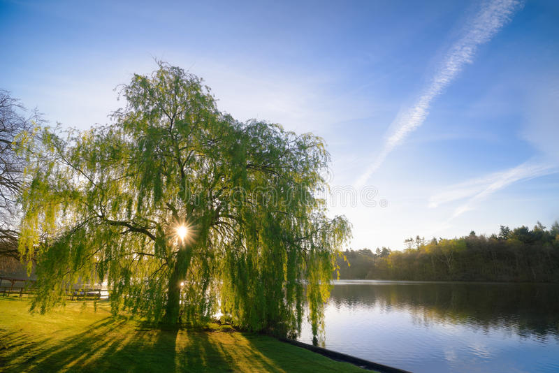 Image result for sun and rain and willow trees free photos