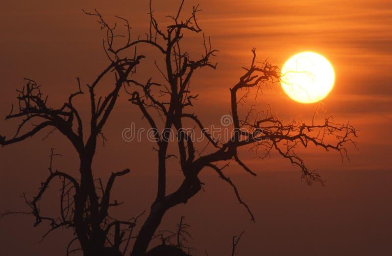 Sunrise in the winter stock photo