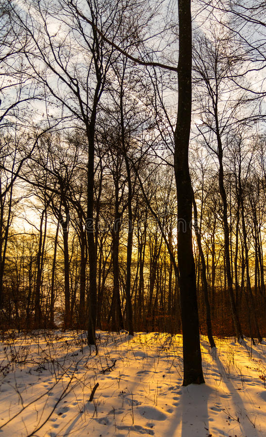 Sunrise in winter forest stock image