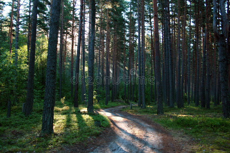 Sunrise in a wood. stock images