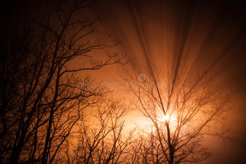 Sunrise in the woods royalty free stock photo