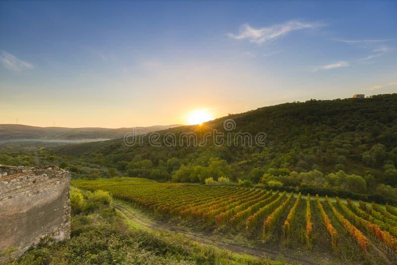 Sunrive over wijngaard in zuidelijk Italië royalty-vrije stock afbeelding