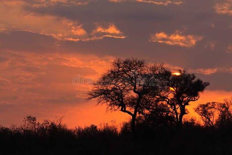 Sunrize en llanos del elefante fotografía de archivo