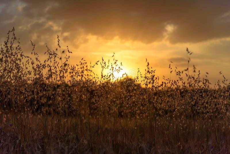 Sunset4 stockfotos