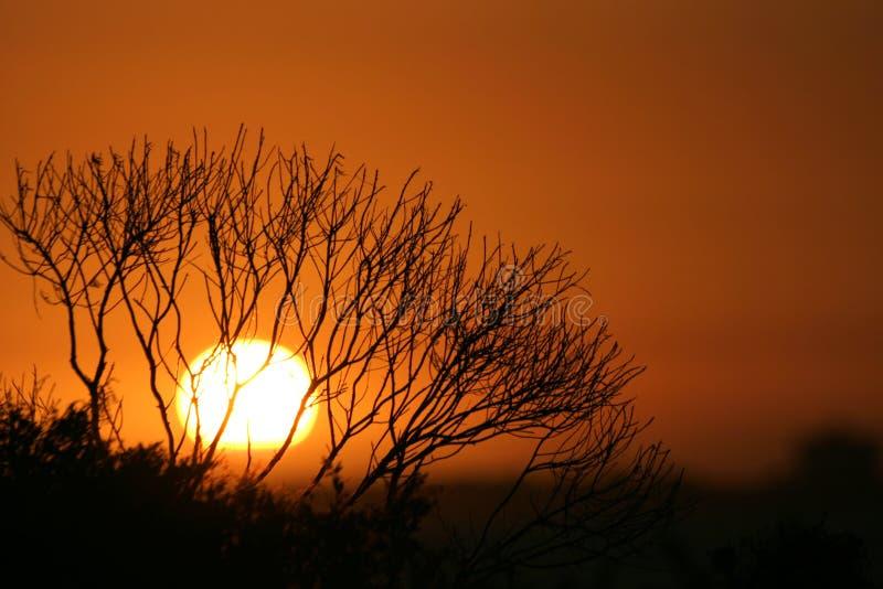 Sunset. At St. Kilda Beach royalty free stock image