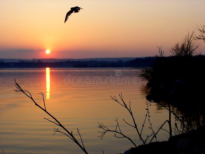 Download Sunset stock image. Image of seagull, dark, boat, bird - 164639