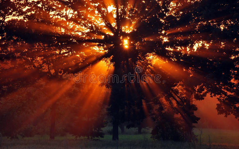 Download Sunset stock photo. Image of background, natural, nature - 18421078