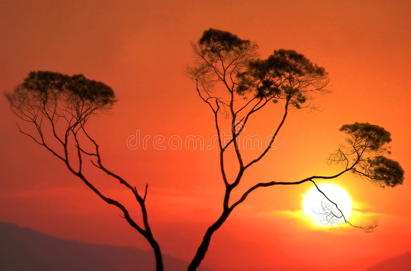 Download Sunset stock photo. Image of plants, nature, tree, autumn - 28780