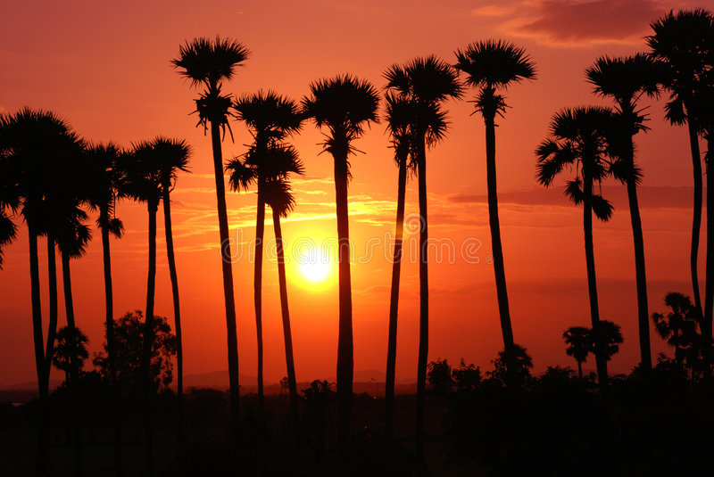 Sunset. Beautiful sunset background with palm trees silhouette