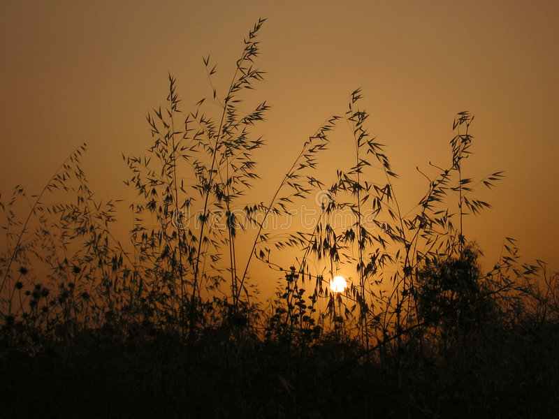Download Sunset stock image. Image of thorn, gloaming, sunset, evenfall - 377103