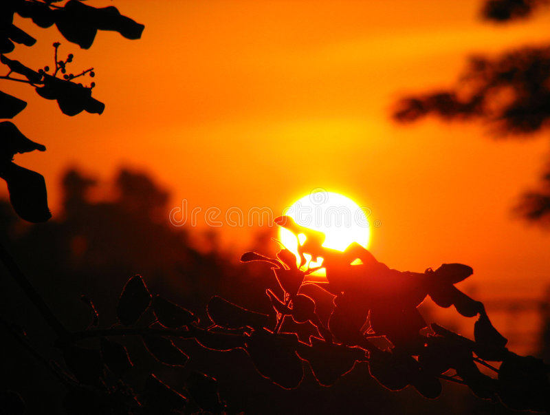 Download Sunset Royalty Free Stock Photo - Image: 4796485