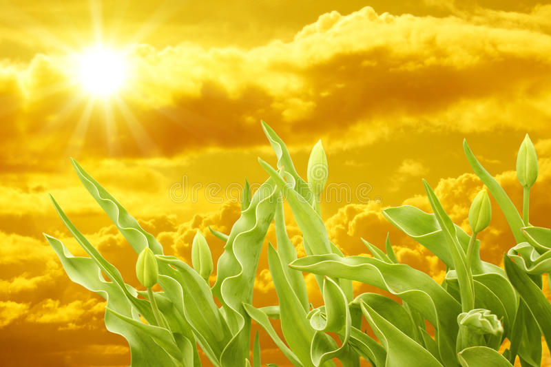 Download Sunset stock image. Image of freshness, floral, growth - 9634701