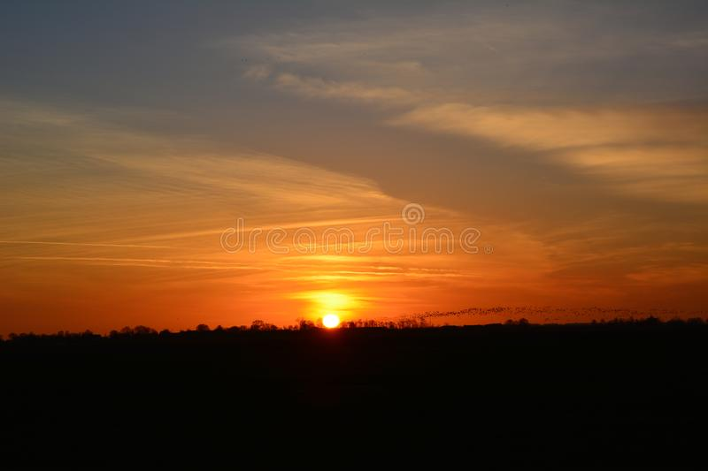 Sunset at Abcoude the Netherlands, goose flying in the background royalty free stock photography