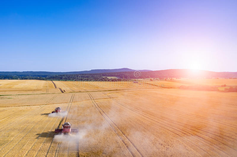 Sunset above the combines working on the wheat field royalty free stock images