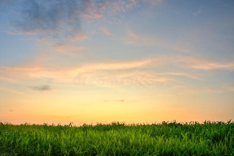 Sunset above the grass royalty free stock photos