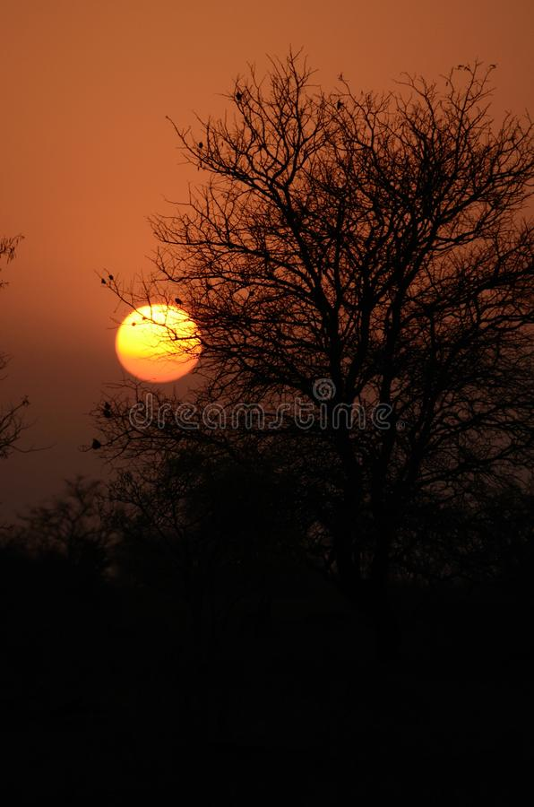 Sunset in Africa. The sun is going down behind the tree royalty free stock image