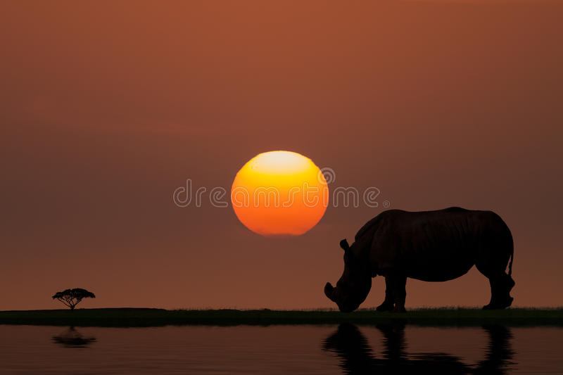 Download Sunset in Africa stock image. Image of black, dark, african - 47764497