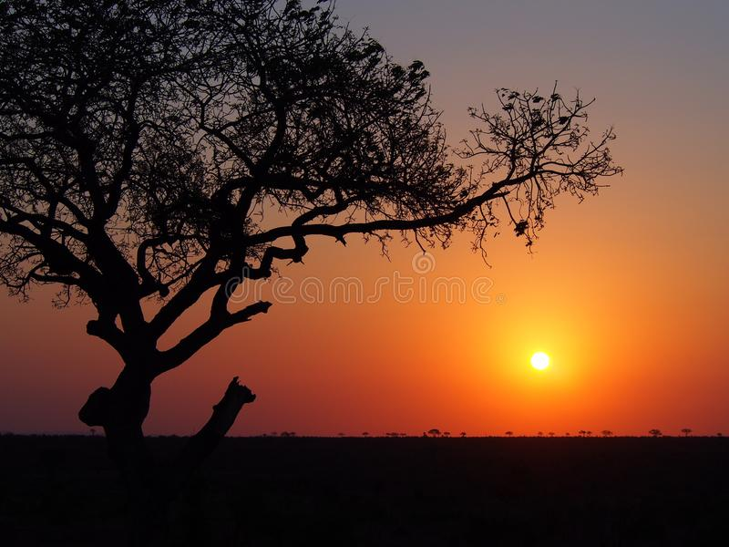Sunset on african plain. Sunset on african plain with tree. Taken in Kruger Park, South Africa royalty free stock image