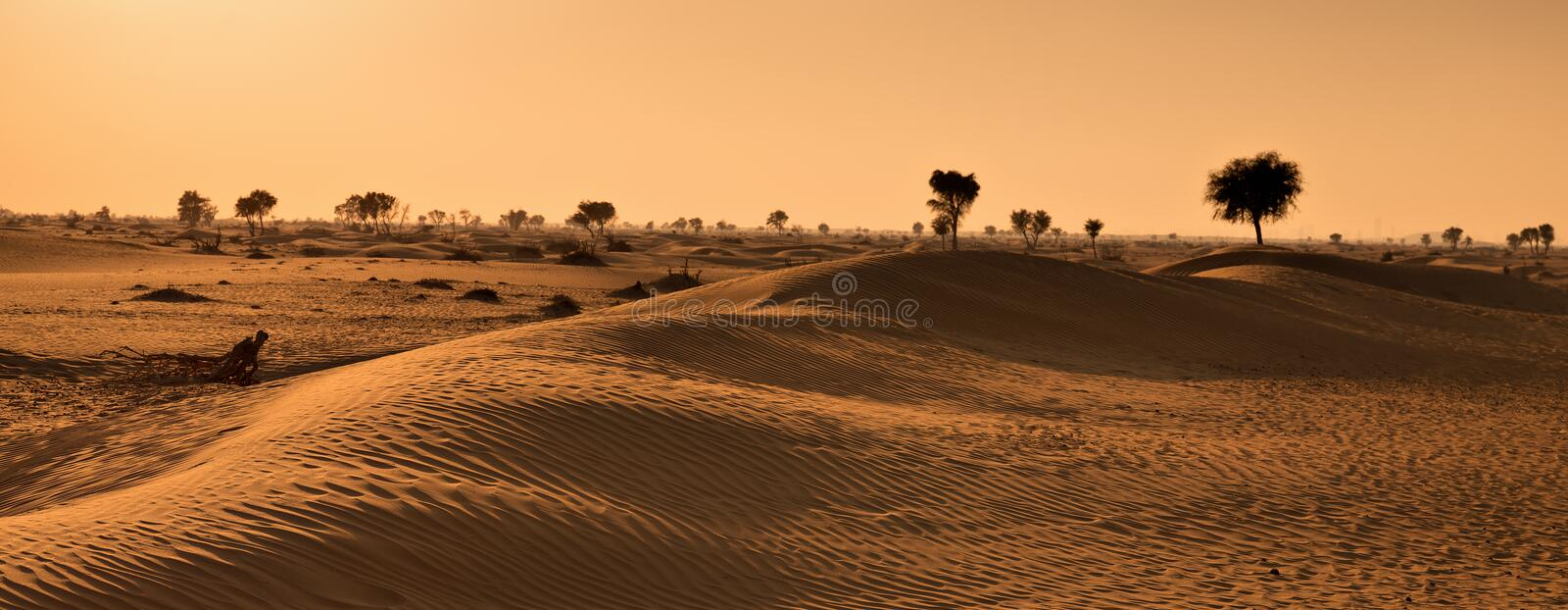 Sunset in the Arabian desert royalty free stock photography