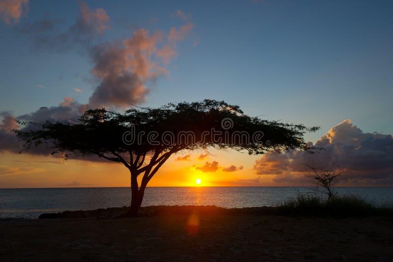 Sunset in Aruba. Tree at sunset in Aruba at beach royalty free stock photography