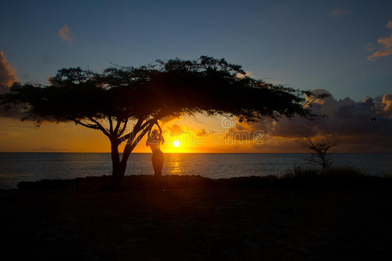 Sunset in Aruba. Woman by tree at sunset in Aruba royalty free stock photo