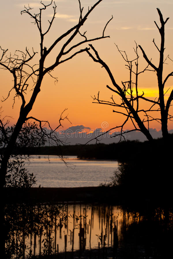 Free Sunset At Mangrove Preservation Area Royalty Free Stock Photo - 15575455