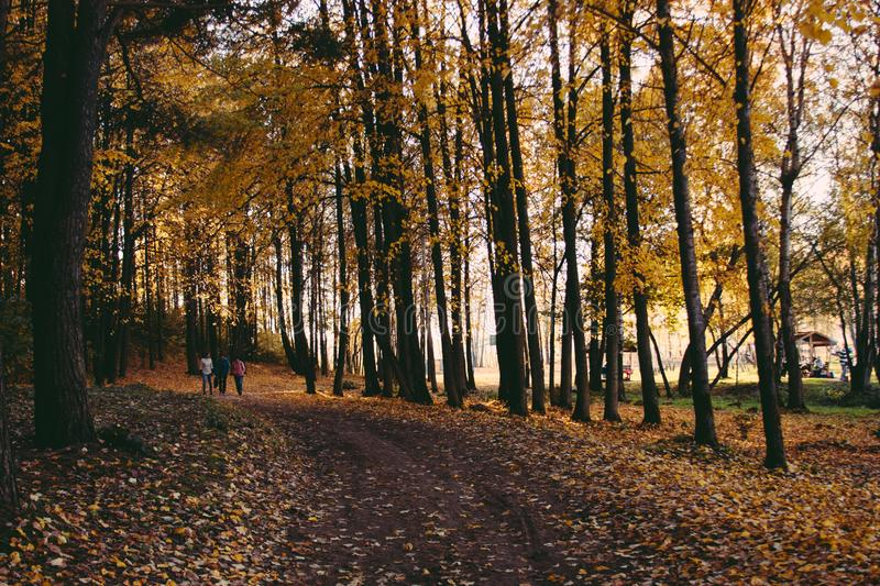 Sunset, autumn trees and road. People walking in forest. Sunlight through tree foliage stock photos
