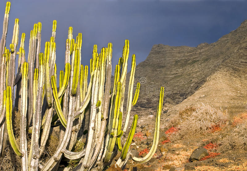 Download Sunset Background With Cactus Stock Images - Image: 26750024