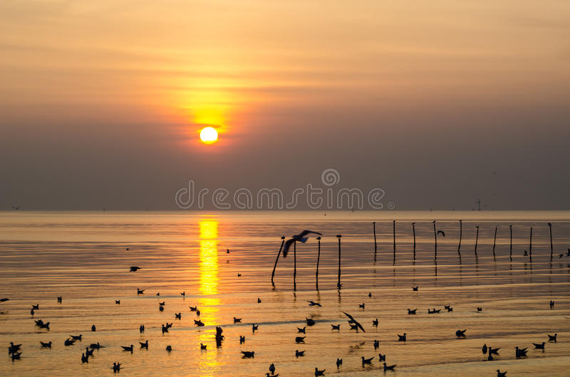 Download Sunset stock photo. Image of dusk, twilight, thailand - 36458360