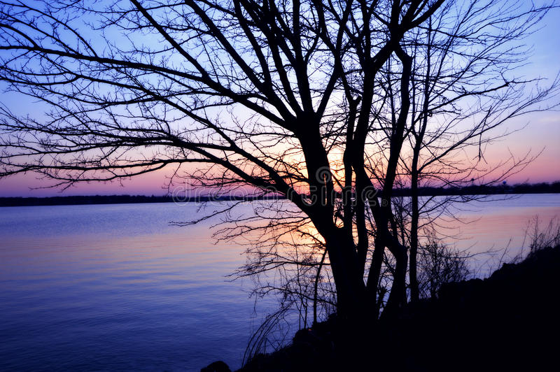 Sunset Bare Branches. A beautiful sunset on Lake Delevan in Wisconsin with pretty purples, blues and pinks behind a tree with bare branches silhouetted in the stock photo
