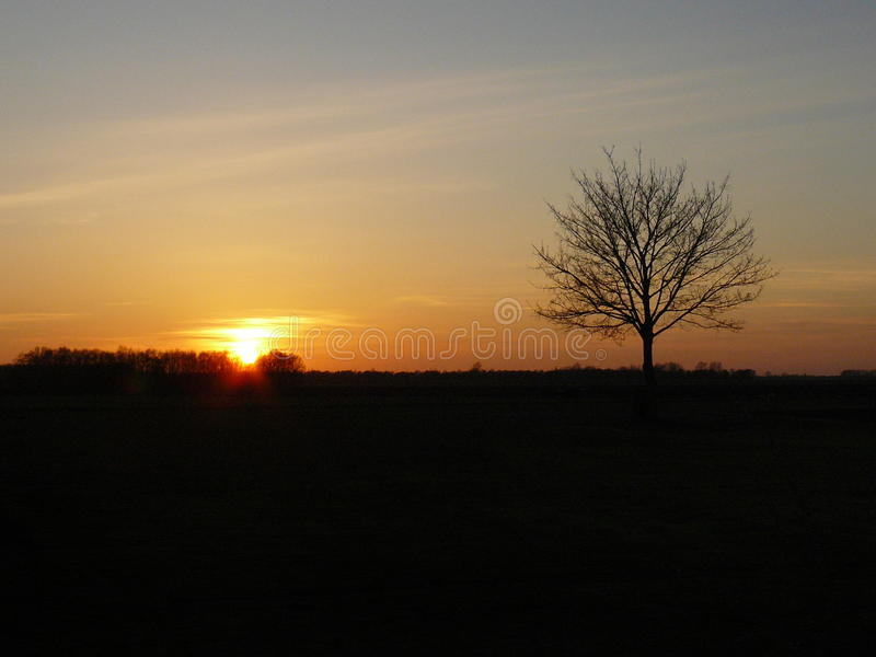 The sunset with bare tree stock photo