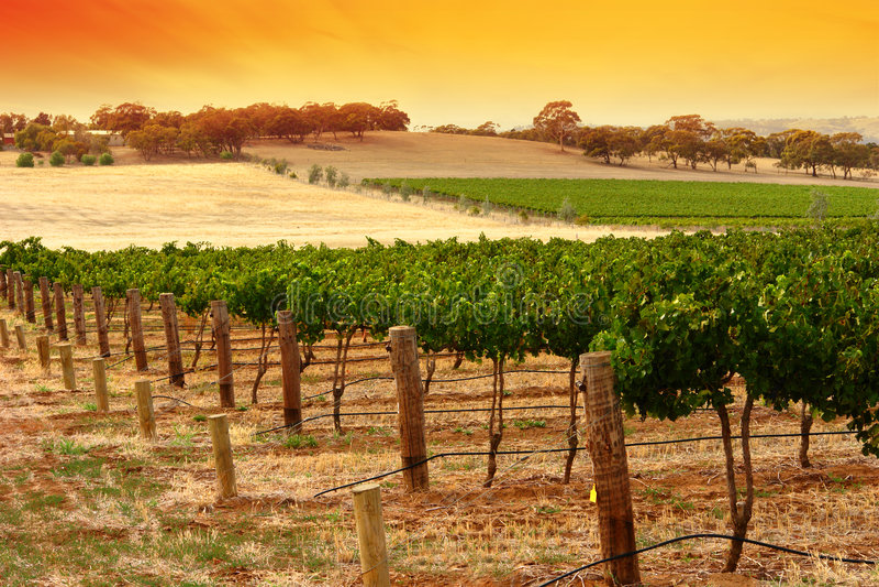 sunset barossa winnica fotografia stock