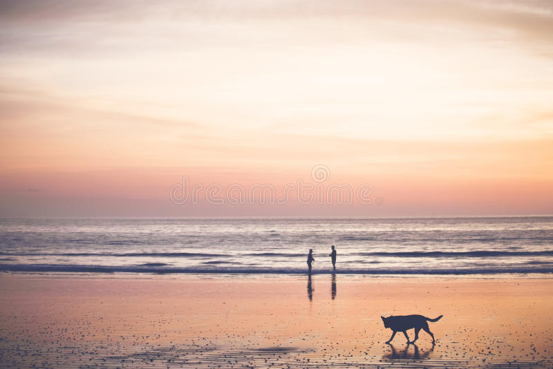 Download Sunset on the beach stock photo. Image of bright, collecting - 64636702