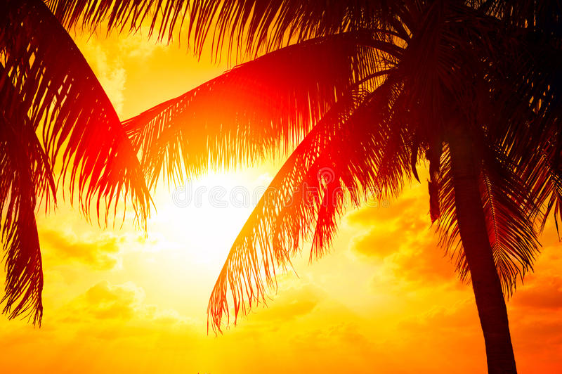 Sunset beach with palm trees and beautiful sky royalty free stock image