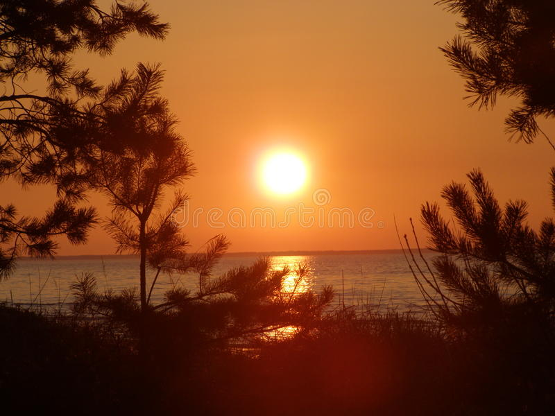 Sunset on beach, pines, sea royalty free stock image