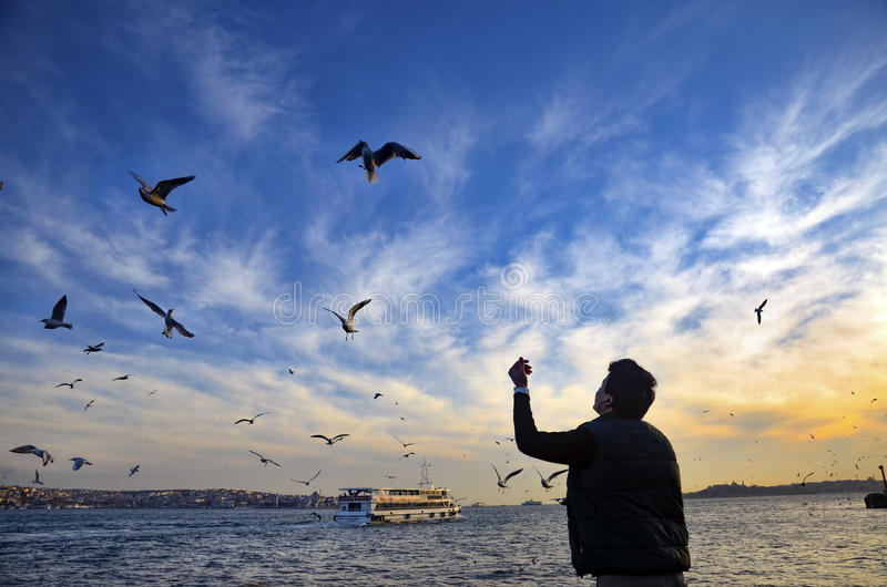 Sunset on the beach seagulls food-giving a man. Istanbul, Turkey - February 2, 2014: Sea of Marmara, the Bosphorus The city of Besiktas in Istanbul, sunset on royalty free stock photo