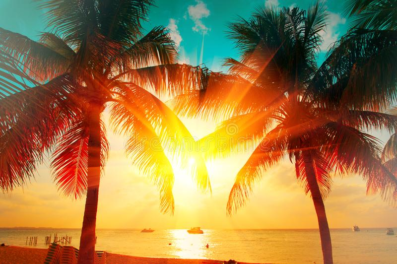 Sunset beach with tropical palm tree over beautiful sky. Palms and beautiful sky background. Tourism, vacation concept backdrop stock image